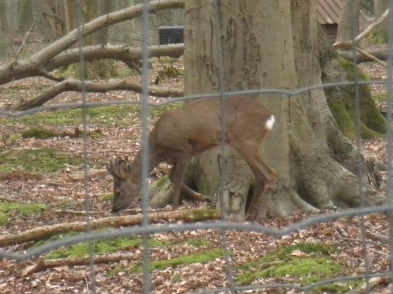 Forêt de Roumare : parcours de santé mercredi 29 mars P1010438