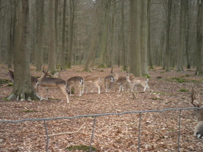 Forêt de Roumare : parcours de santé mercredi 29 mars P1010439