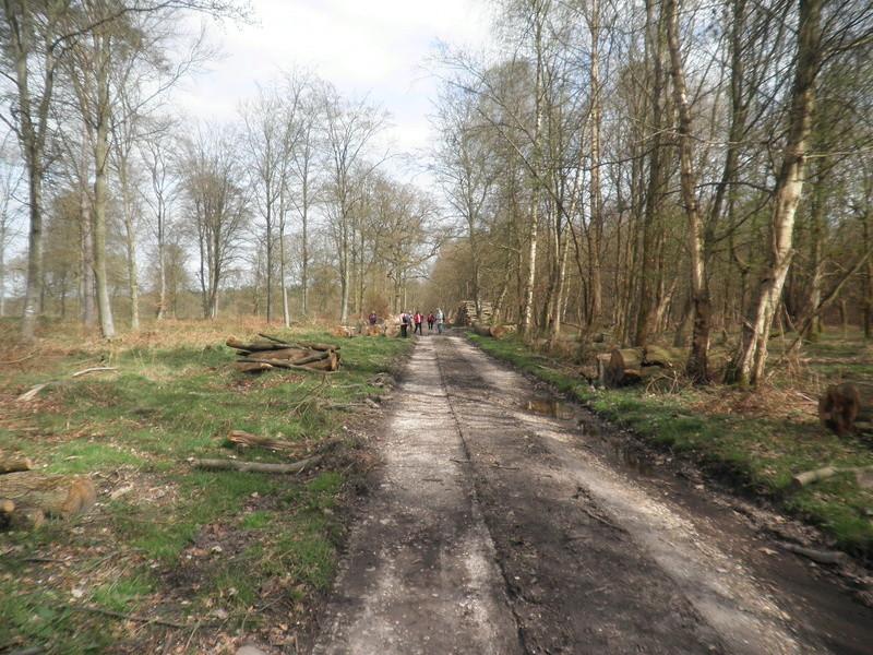 Forêt de Roumare : parcours de santé mercredi 29 mars P1010441