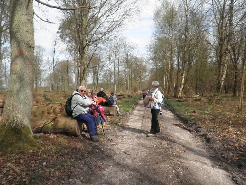 Forêt de Roumare : parcours de santé mercredi 29 mars P1010442