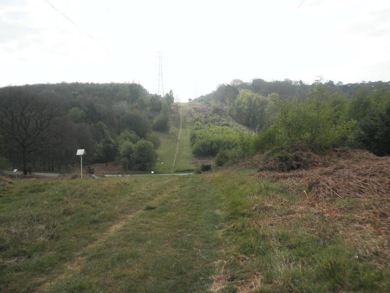 Forêt de Roumare : samedi 30 avril P1010544