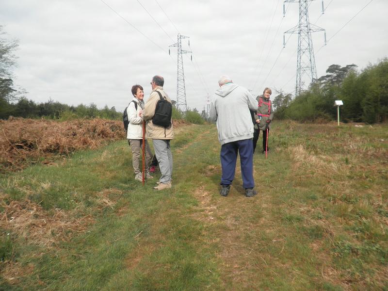 Forêt de Roumare : samedi 30 avril P1010545