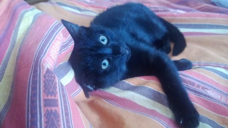 Perdite ematiche gatto 05052010