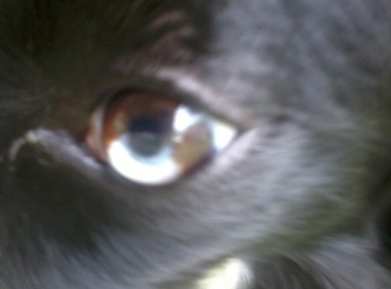 noir aux yeux bleu =merle fantome ? - Page 2 2017-055