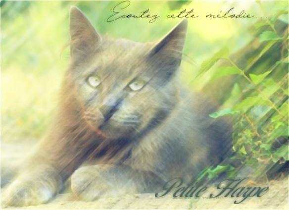 Piaf - ldd Beauti11