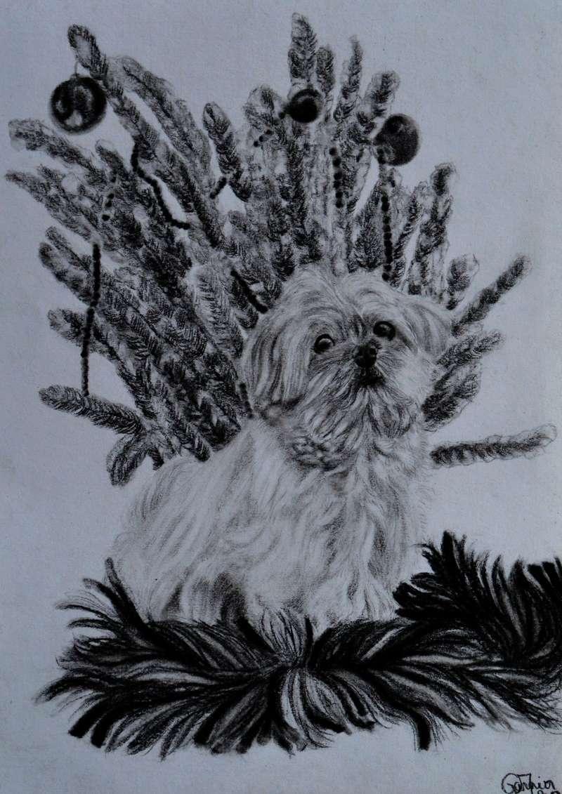 Portraits animalier et quelques dessins personnels 1010