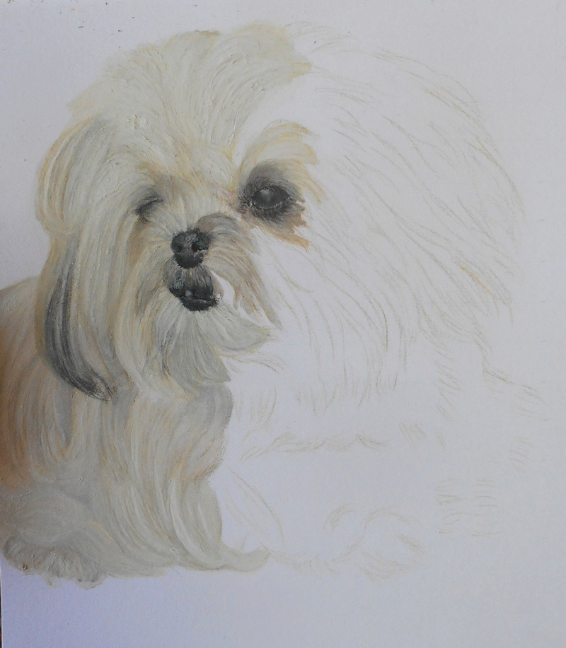 Portraits animalier et quelques dessins personnels - Page 4 1117