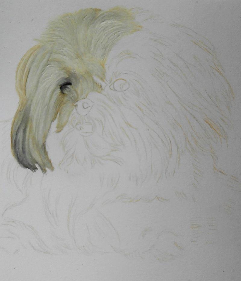 Portraits animalier et quelques dessins personnels - Page 3 214