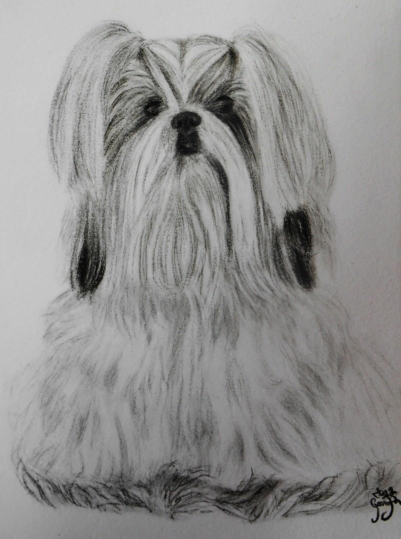 Portraits animalier et quelques dessins personnels - Page 3 513