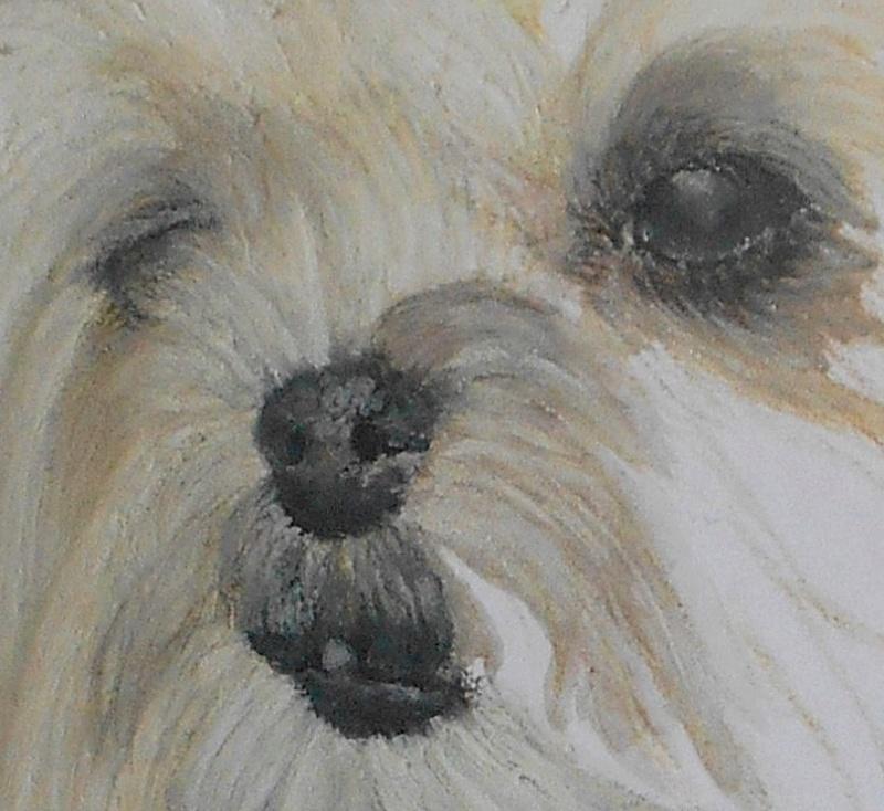Portraits animalier et quelques dessins personnels - Page 4 515