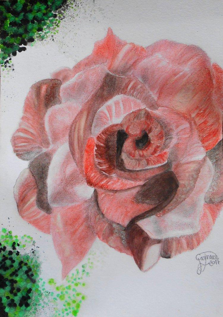 Portraits animalier et quelques dessins personnels - Page 2 Rose_v10