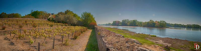 Entre vigne et Loire Vigne_10