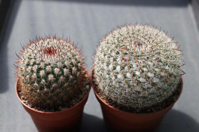 Plants for swap ! M_verk13
