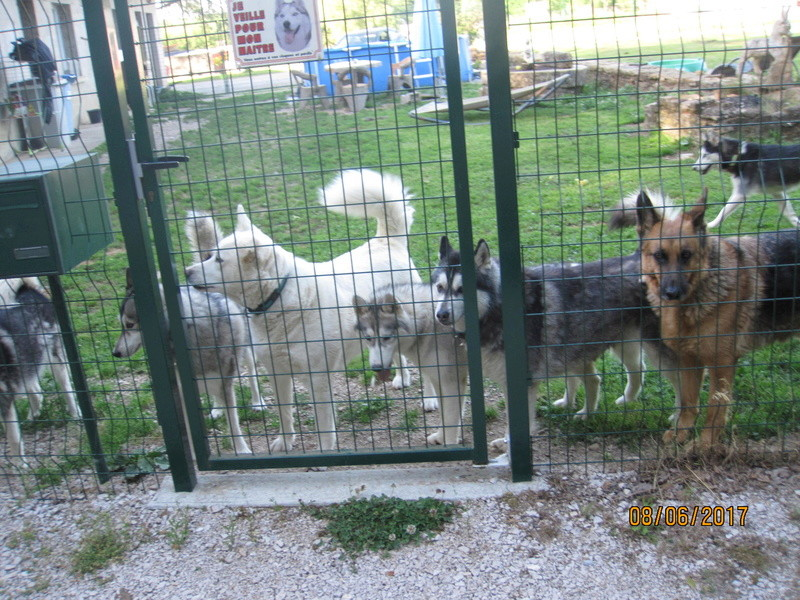 Saskia, Jiro, et leurs copains 420
