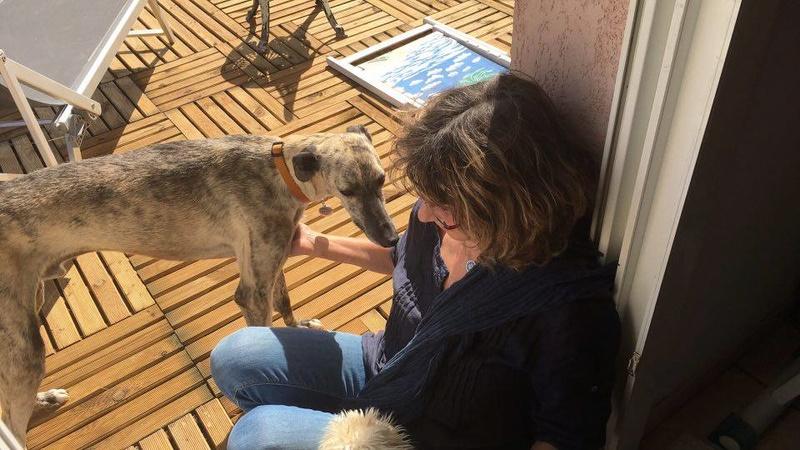 BASTIAN , galgo né en 2013, à l'adoption  SCOOBY FRANCE  - Page 3 Bastia21
