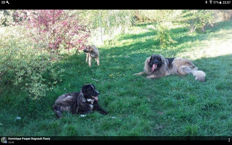 Beggy  Scooby France Adoptée  Beggy115