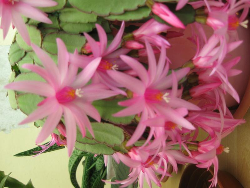 Floraisons d'intérieur  - Page 6 Img_0810