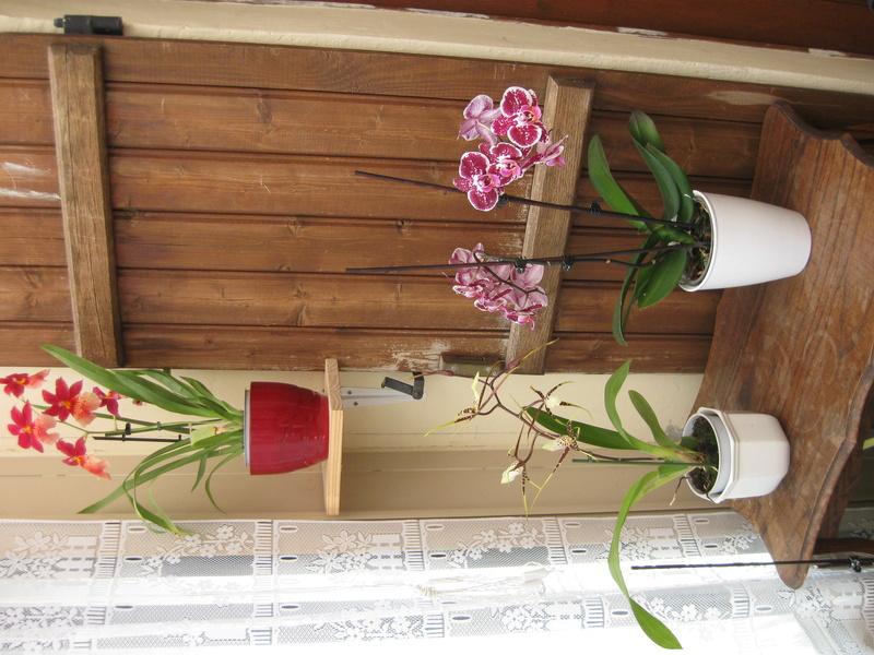 floraisons des orchidées - Page 42 Orchid10