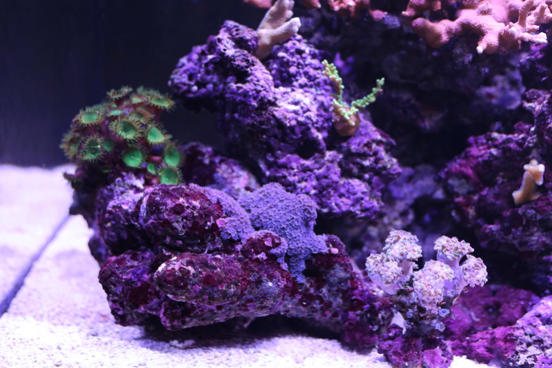 mon redsea reefer 250 - Page 2 Aquari10