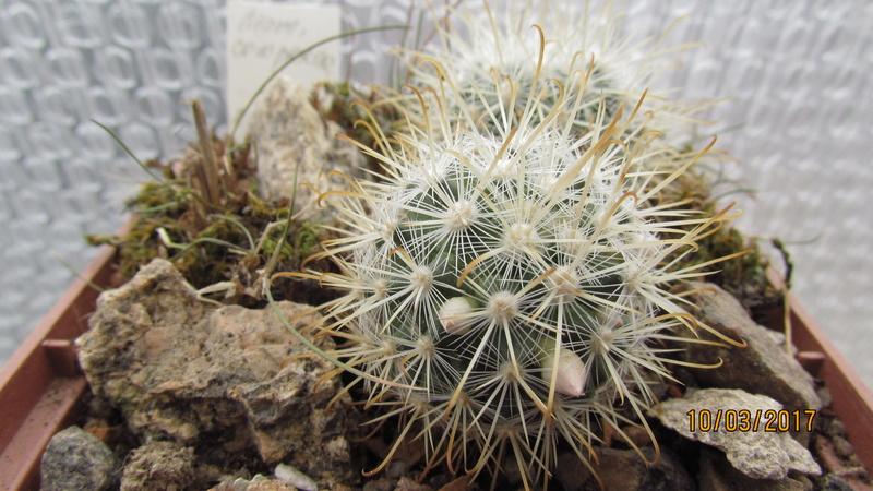 Cactus under carbonate 14 Fm_cow11