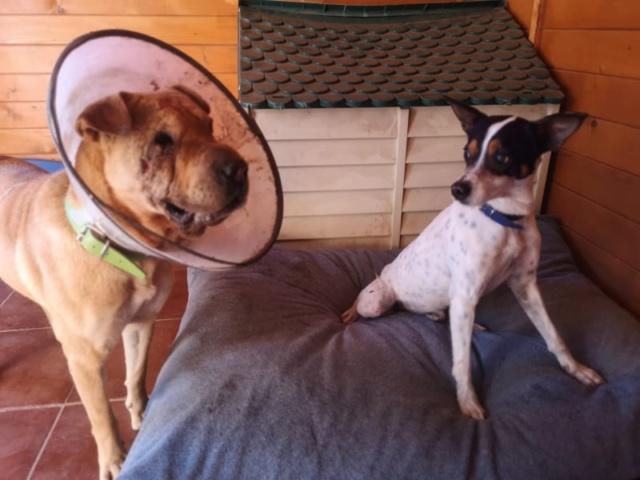 2 pallets voor Canis y Felis 1035