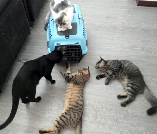De katten van Cristina  1130