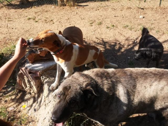 2 pallets voor Canis y Felis 1230