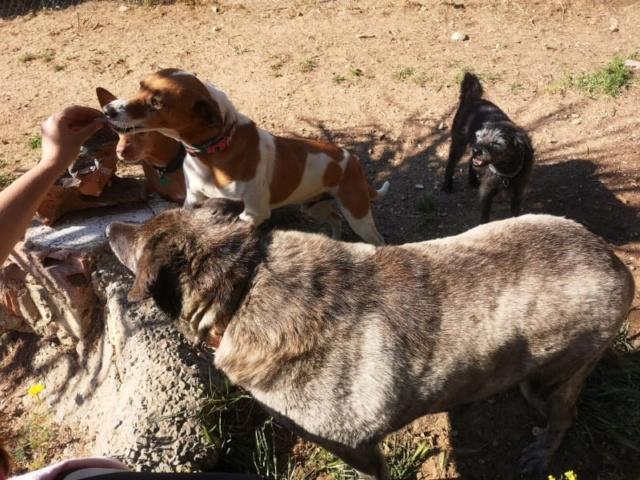 2 pallets voor Canis y Felis 1324