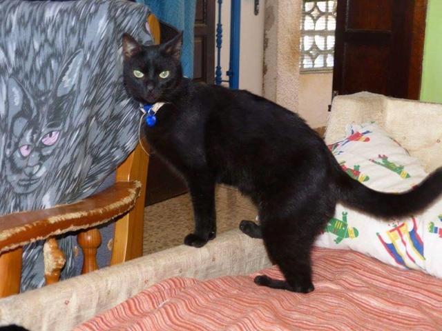 Canis - Sam (gedeeltelijke adoptie) 17021410