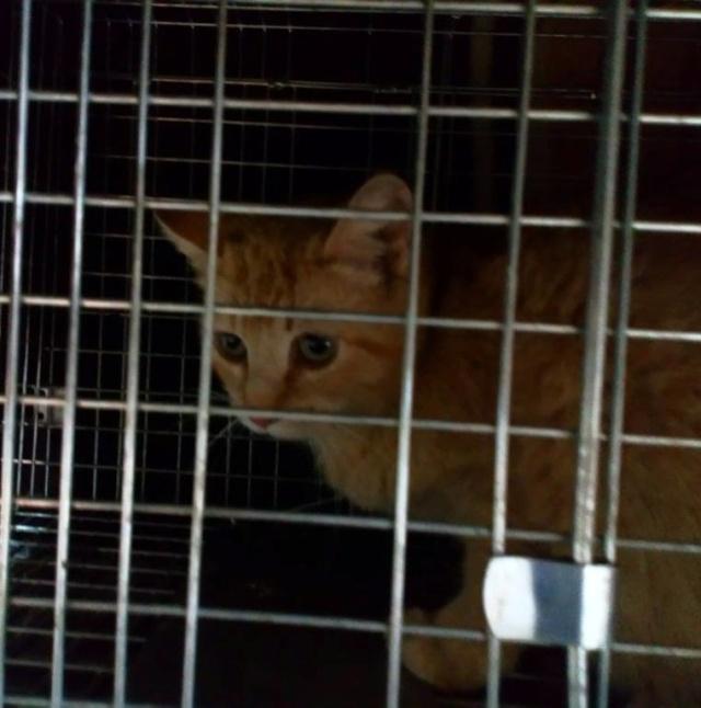 De katten van Cristina  177