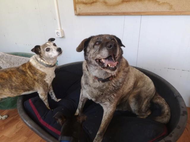 2 pallets voor Canis y Felis 1815