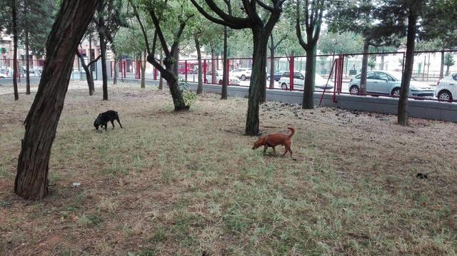 Canis Yoda 18818010