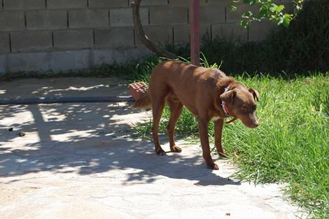 Canis - Golfo 18944310