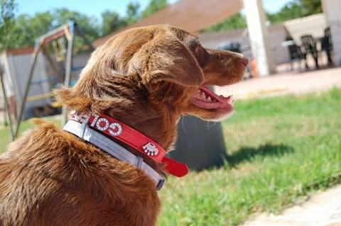 Canis - Golfo 18945410