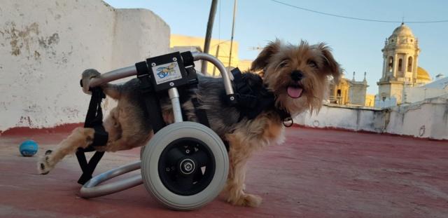 Een rolstoel voor Kika 1b2d2210