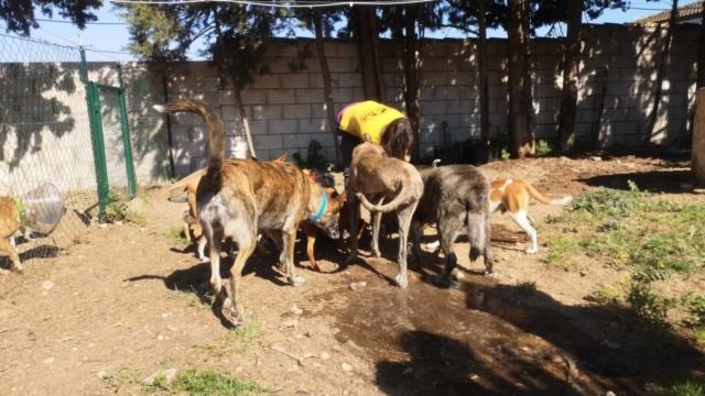 2 pallets voor Canis y Felis 2018