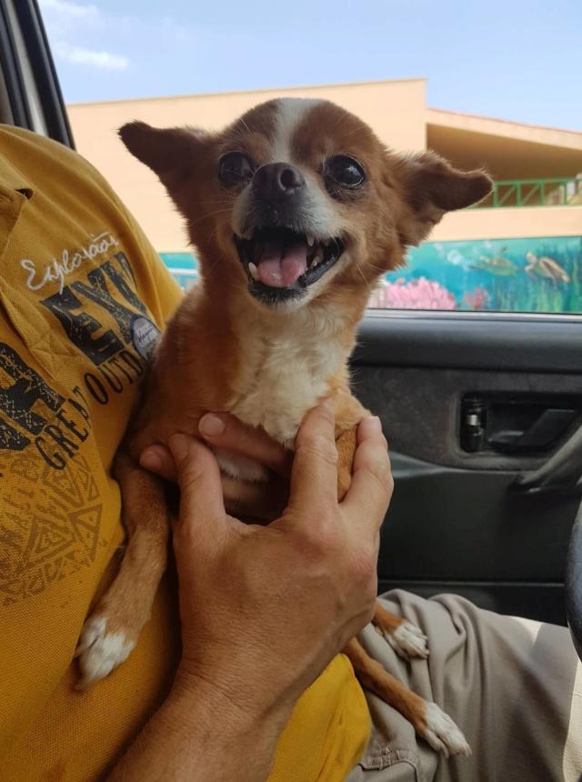 Kleine hond van de straat gehaald - Duna 2019