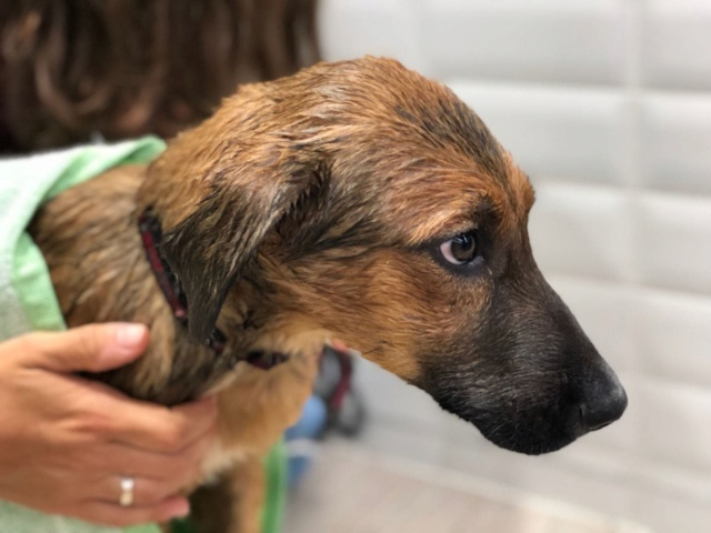 3 honden gered 2110