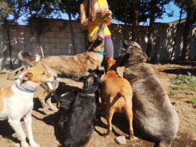 2 pallets voor Canis y Felis 2117