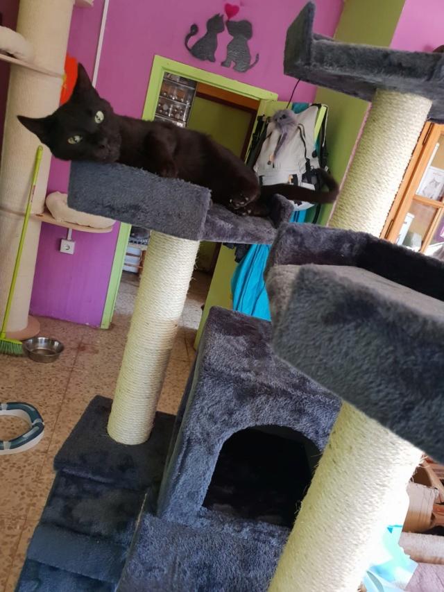 Krabpalen voor Canis y Felis - Blije katten 2219
