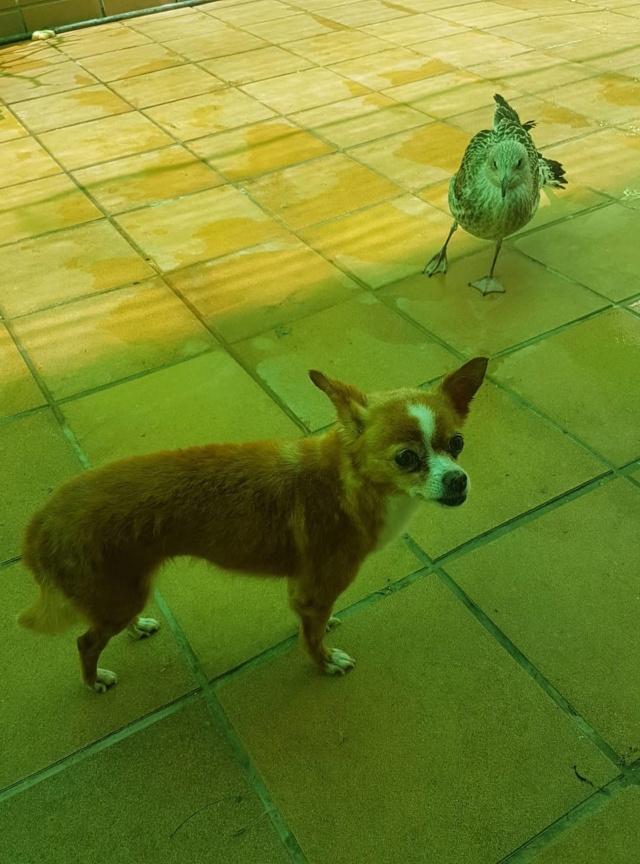 Kleine hond van de straat gehaald - Duna 2417