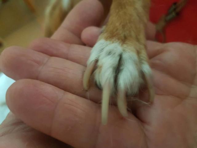 Kleine hond van de straat gehaald - Duna 2717