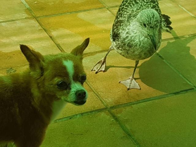 Kleine hond van de straat gehaald - Duna 2815