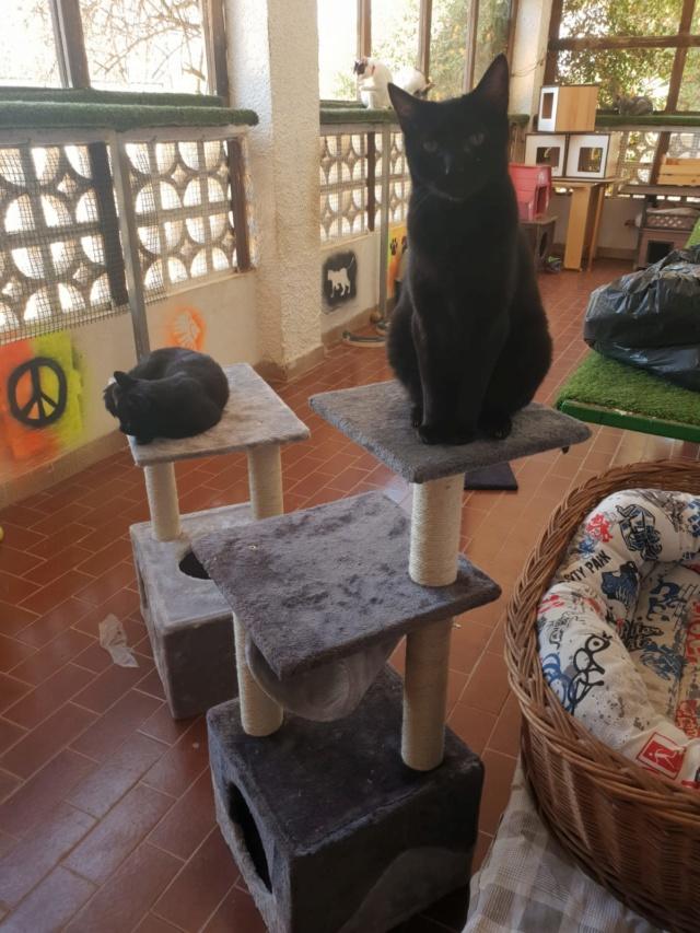 Krabpalen voor Canis y Felis - Blije katten 2912