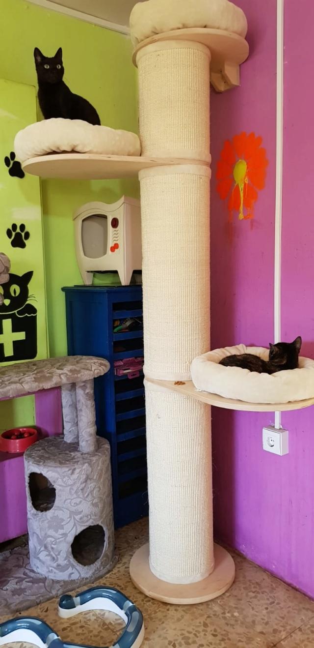Krabpalen voor Canis y Felis - Blije katten 30a10