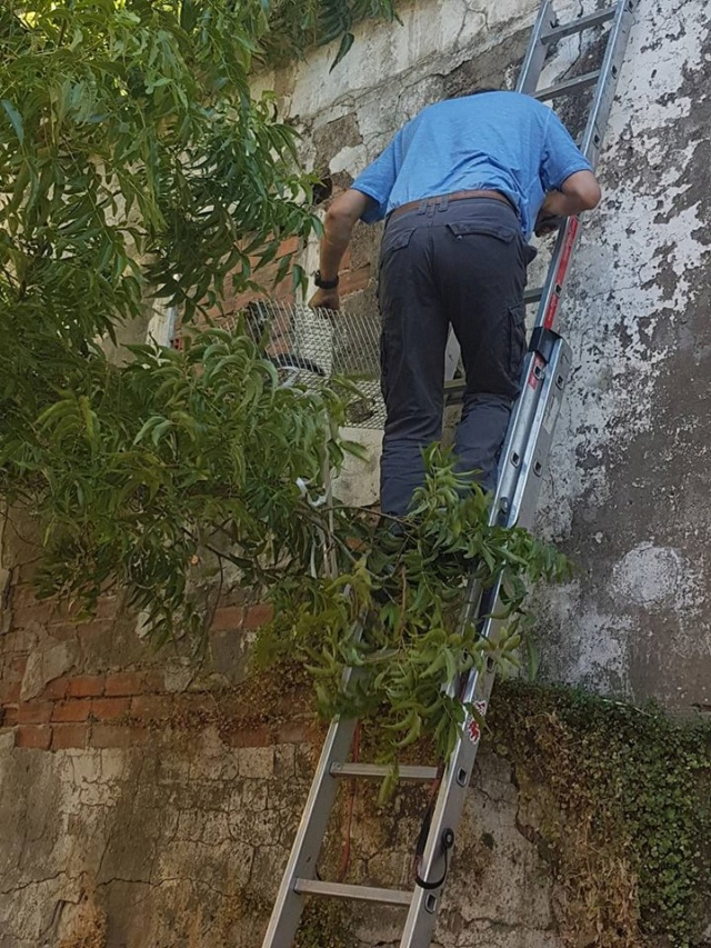 juli - Met gedoneerde vangkooi kitten gevangen 327