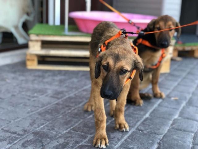 3 honden gered 3310