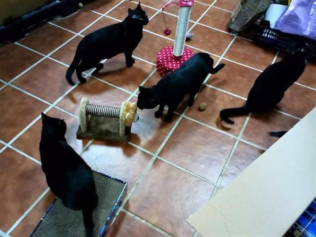 De katten van Cristina  3314