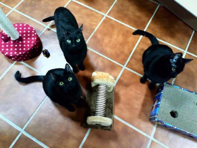 De katten van Cristina  3413