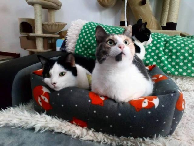 De katten van Cristina  3513